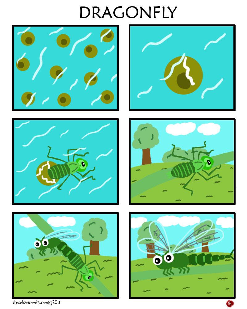 PFFT #40 Dragonfly
